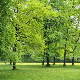 Heppenheim Grünflächenmanagement